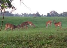 There is an entire deer family that calls our Wekiva Plant home.
